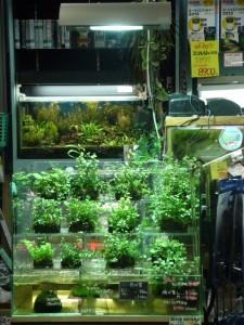 greenstore 075